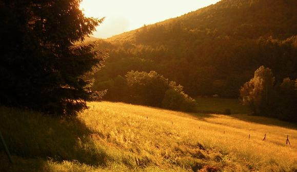 Grief fields