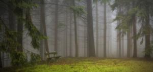 Grief fog