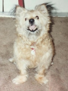 Photo of Rossmore the dog